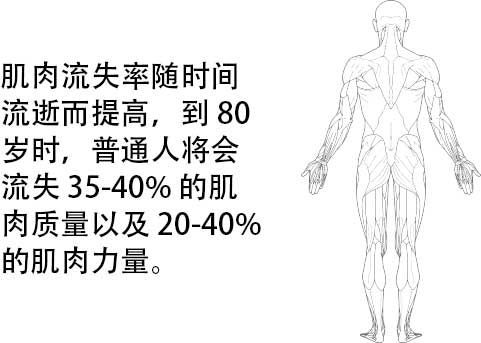 rate of muscle loss info in Chinese