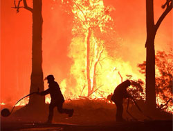 How to help the victims of Australia's wildfires