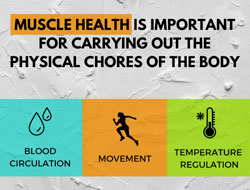 The Importance of Muscles to Overall Health