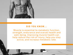 Muscle Health 101