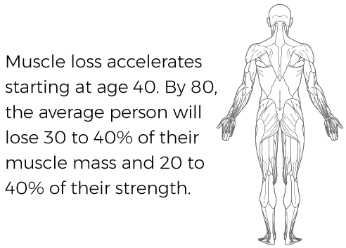 skeletel muscle graphic with text Muscle loss accelerates starting at age 40. By 80, the average person will lose 30 to 40% of their muscle mass and 20 to 40% of their strength.
